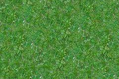 Texture d'usines d'herbe et de terre Image stock