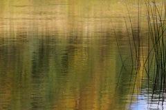 Texture of a dark autumn water Stock Image