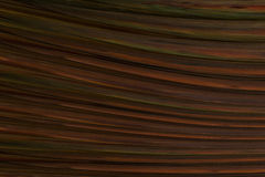 Texture dark brown base color background Stock Image