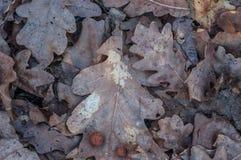 Texture of dark brown fallen leaves stock photo
