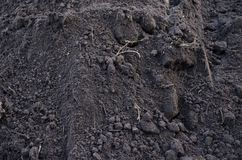 Texture of dark fertile land with grass roots stock images