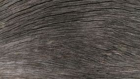 Texture. Dark texture of old wood Royalty Free Stock Images