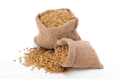 Texture de blé Image libre de droits