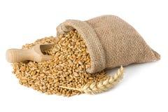 Texture de blé Image stock