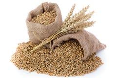 Texture de blé Photo libre de droits