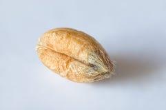Texture de blé Photographie stock