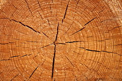 Texture de bois Photos libres de droits