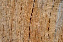 Texture de bois de chêne Photographie stock libre de droits