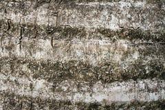 Texture de bois d'écorce Photographie stock