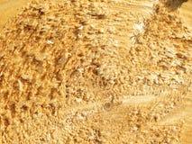 Texture de bois de construction Photos stock