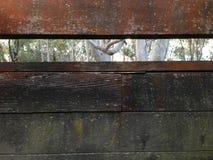 Texture de bois de construction Photo libre de droits