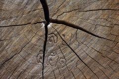 Texture de bois de construction d'arbre Image libre de droits