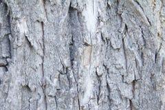Texture de bois dur Images libres de droits