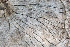 Texture de bois scié vieux par pluriannuel photographie stock libre de droits