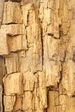 Texture de bois superficiel par les agents et criqué Image stock