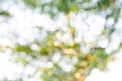 Texture de Bokeh ou fond verte, cercle de tache floue Image libre de droits