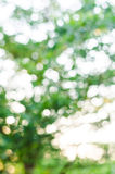 Texture de Bokeh ou fond verte, cercle de tache floue photo libre de droits
