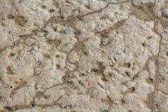 Texture de boue Images stock
