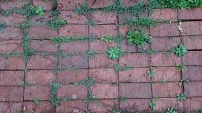 Texture de briques rouges Photographie stock libre de droits