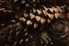 Texture de cônes de pin de Noël Fond de cônes de pin Fond et texture abstraits pour des concepteurs Vue de plan rapproché d'escro Image libre de droits