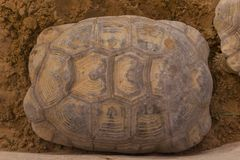 Texture de carapace de tortue images libres de droits