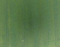 Texture de champ de blé Fond de jeune blé vert sur le champ Photo du quadrocopter Photo aérienne du champ de blé Images stock