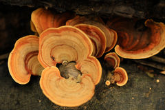 Texture de champignon Photos stock
