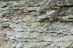 Texture de chaux de rivière Images libres de droits