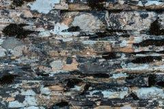 Texture de chaux et de dolostone Image libre de droits