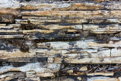 Texture de chaux et de dolostone Image stock