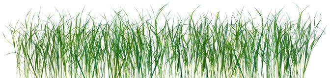 Texture de configuration d'herbe d'isolement Photo libre de droits