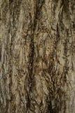 Texture de contreplaqué de couleur en bois Images libres de droits