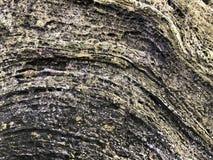 Texture de coquille de Coquin près images stock