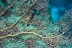 Texture de corail Photo libre de droits
