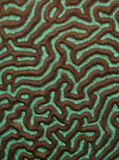 Texture de corail Photo stock