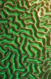 Texture de corail verte Photo libre de droits