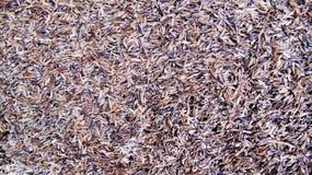 Texture de cosse de riz photos stock