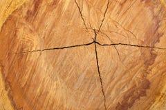 Texture de coupe d'arbre Images libres de droits