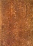 Texture de cuir de peau de crocodile Images libres de droits