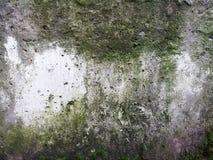 Texture de dalle en béton dans la mousse et le moule verts, fond images stock