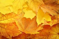 Texture de feuille d'Autamn Photographie stock libre de droits