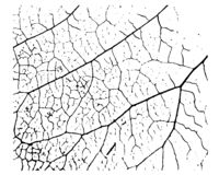 Texture de feuille d'usine illustration de vecteur