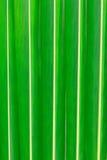 Texture de feuille de noix de coco Images stock