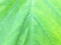 Texture de feuille verte de carbone Photos libres de droits