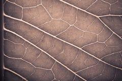 Texture de feuille verte fraîche pour le fond naturel toned Photos libres de droits