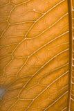 Texture de feuille verte fraîche pour le fond naturel toned image stock