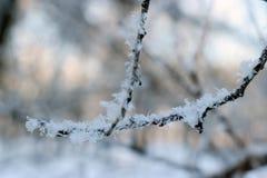 Texture de fin de gel vers le haut - des branches d'arbre noires et de la neige blanche, fros de dentelle d'hiver images stock