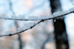 Texture de fin de gel vers le haut - des branches d'arbre noires et de la neige blanche, fros de dentelle d'hiver images libres de droits