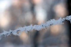 Texture de fin de gel vers le haut - des branches d'arbre noires et de la neige blanche, fros de dentelle d'hiver photo stock