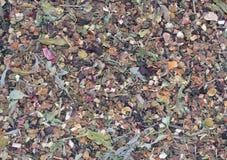 Texture de fines herbes multiple sèche de thé d'hiver de feuilles Photographie stock libre de droits
